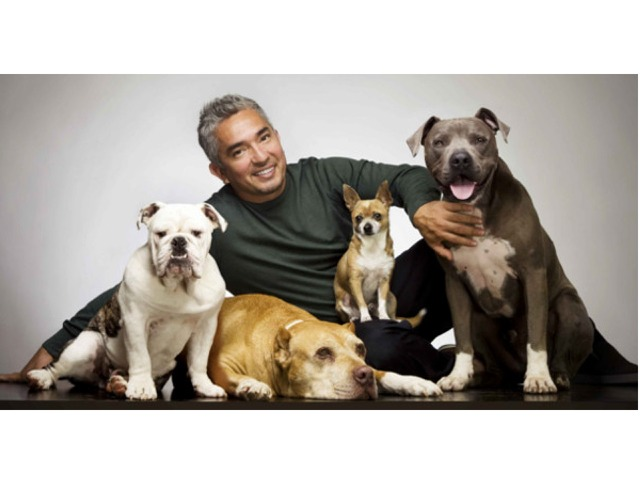 DOG WHISPERER CESAR MILLAN NEARLY KILLED IN ATTACK FROM STRAY CAT